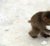 Funny Animals - Stealing Some Snow