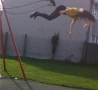 Funny Pictures - Swing