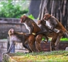 Funny Animals - The Foursome