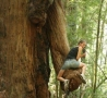 Funny Pictures - Tree Penis