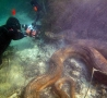 Cool Pictures - Underwater Anaconda