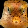 Funny Animals - New Sea Creatures Discovered
