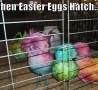 Easter Funny Pictures - When Eggs Hatches