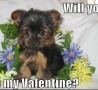 Valentines Pictures - Will You Be My Valentine?