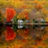 Cool Pictures - Tree Reflection